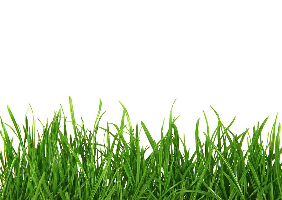 En växande affärsidé - bild på gräs